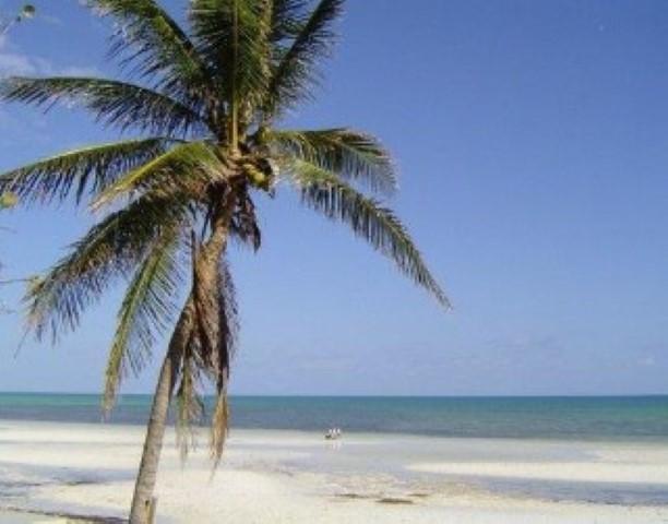 Back of Home - SEA GRAPE - Long Key - rentals