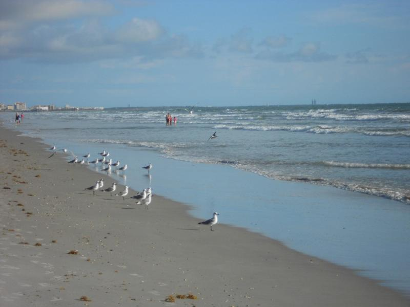 Sandcastles Beach Front. - Sandcastles, Ocean View, Beach Front building - Cocoa Beach - rentals
