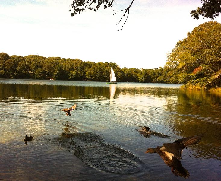 Sail and ducks in our lake - RELAXATION ON THE PEACEFUL BEAUTIFUL LAKE - East Falmouth - rentals