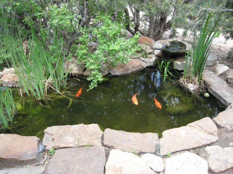 Your private pond - Santa Fe- only $70 a night - Santa Fe - rentals