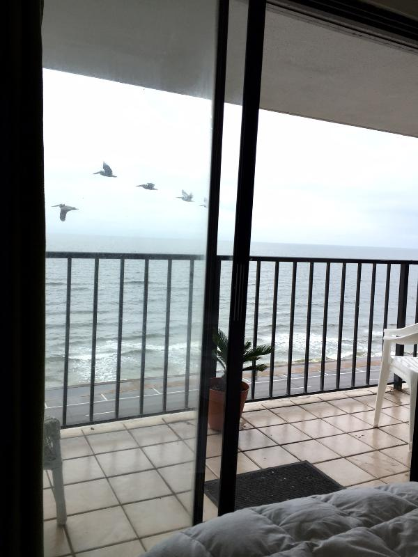 View from the bed in the front bedroom - Panoramic view of the Gulf..Best View in Galveston - Galveston Island - rentals