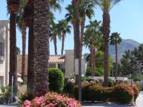 Mtn Vistas from Property - Enjoy the 50  Good Life in Palm Springs Style - Cathedral City - rentals