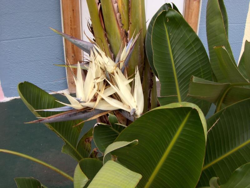 Native Flora and Fauna - 1295.00 Winter Rental in Bradenton, Florida - Bradenton - rentals