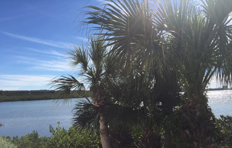 Beautiful intercoastal view!  Hear the palms as they sway in the gentle breeze. - Gorgeous views of Intercoastal, walk to the Gulf! - Indian Shores - rentals