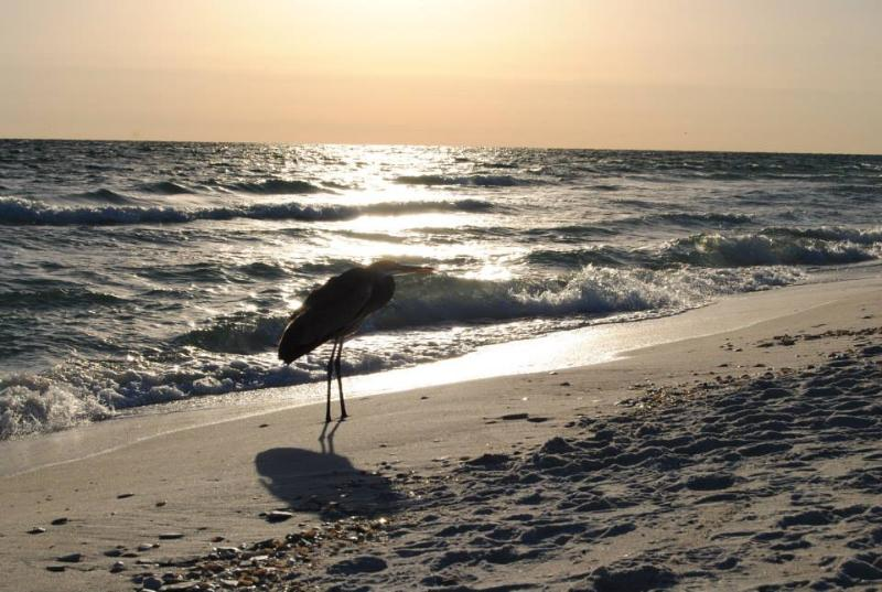 Beautiful sunset walks along our UNCROWDED beach! - 3 BED/2BA (Sleeps 11) Pets//Pool//BEACH ACCESS! - Gulf Shores - rentals