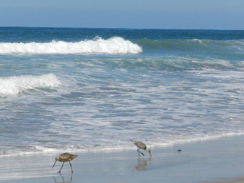 The beach below - SEASCAPE VACATION-CORNER TOWNHOUSE WITH OCEANVIEWS - Solana Beach - rentals