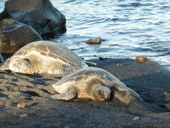 Come snooze and swim with us! - Aloha from the Black Sand Beach - Pahala - rentals