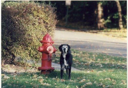 Must Love Dogs - Historic home with private pier in Lake Geneva - Lake Geneva - rentals