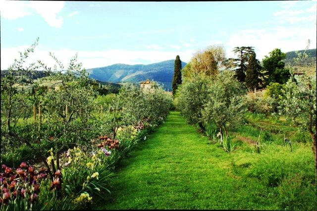 garden and olive trees orchard of  Villa Il Paradisino - farm vacation apartments garden pool Tuscany Villa - Sesto Fiorentino - rentals