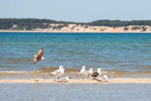 Peace and Tranquility in the Audobon Preserve - Lieutenant Island Home in Audubon Preserve - Wellfleet - rentals