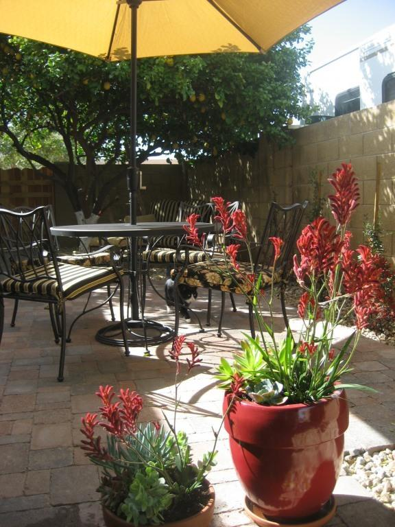 Patio - Enjoy Southwest Living! - Chandler - rentals