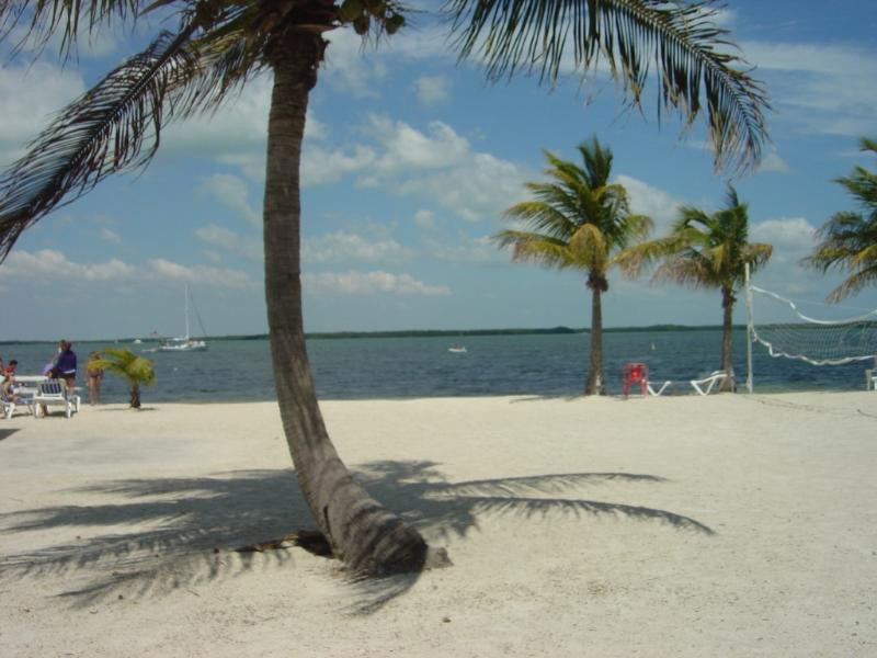 "We had it all in Key Largo! - Key Largo ""Tropical Oasis."" - Key Largo - rentals"