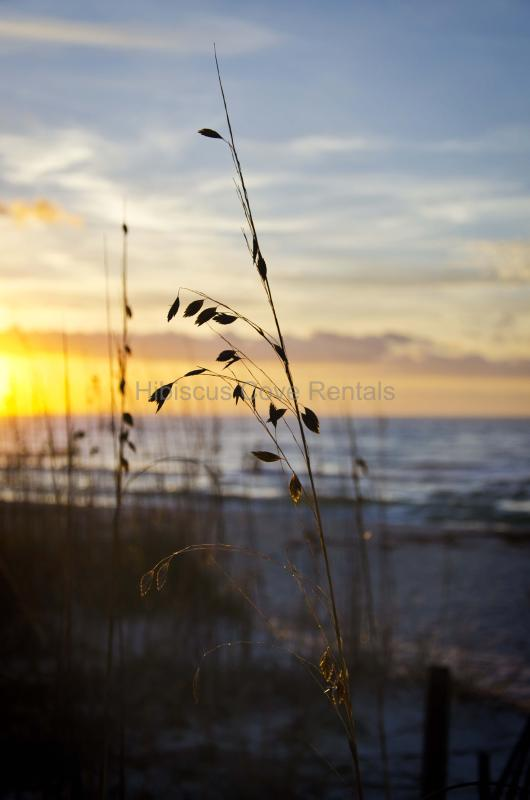 Sea Oats is a magical place where memories happen! - SPRING FLING! 129/nt No Cleaning Fees! (Sleeps 8) - Gulf Shores - rentals