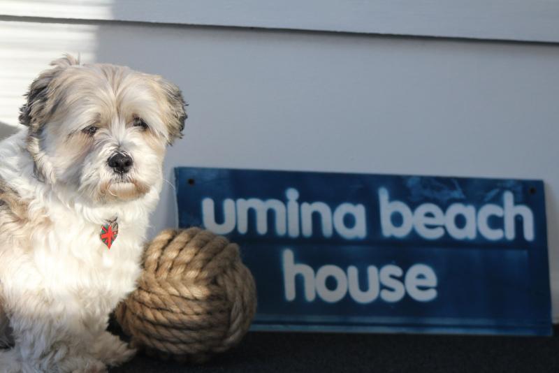 Umina Beach House - Image 1 - Umina Beach - rentals