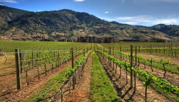 Perched above a vineyard and Osoyoos Lake, this resort offers rest, rejuvenation and fun. - Osoyoos Spirit Ridge Resort Incredible 2 Bedroom Villa! - Osoyoos - rentals