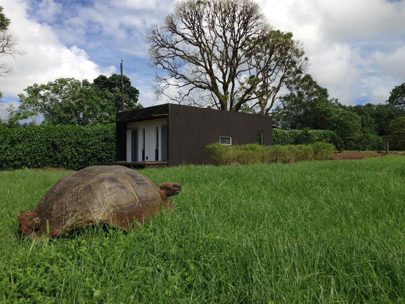 Giant Tortoises in garden of the house. MonteMar - Image 1 - Puerto Ayora - rentals