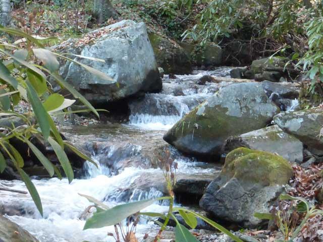 Backyard rushing creek - Maison Ruisseau - Maggie Valley - rentals