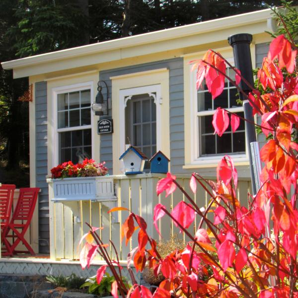 The cottage is 300 sq. including a bed & bath, kitchen , dining /sitting areas, & sea-view deck. - Hiker's Paradise: Blue House Cottage Near St. John's - Tors Cove - rentals