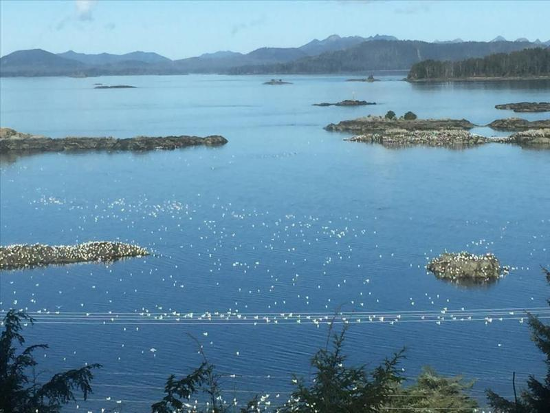 Incredible views. Often you can even see whales jumping below. - Above the Rocks Suite Upper - Sitka - rentals
