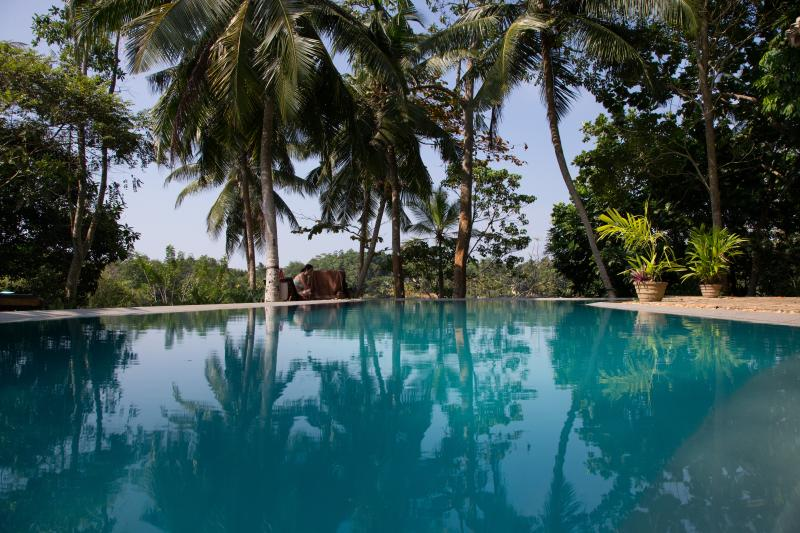 pool side - 3 bedroom villa with swimming pool in Hikkaduwa - Hikkaduwa - rentals