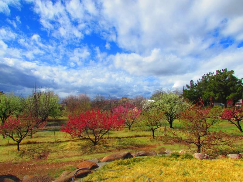 orchard in spring time - Country/Farm Setting yet close to Everything! - Toquerville - rentals