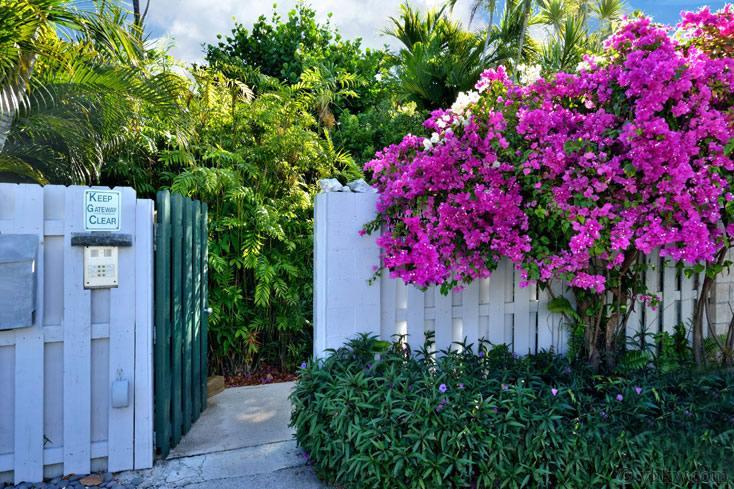 Tropical Sun Garden Retreat ~ Monthly Rental - Image 1 - Key West - rentals