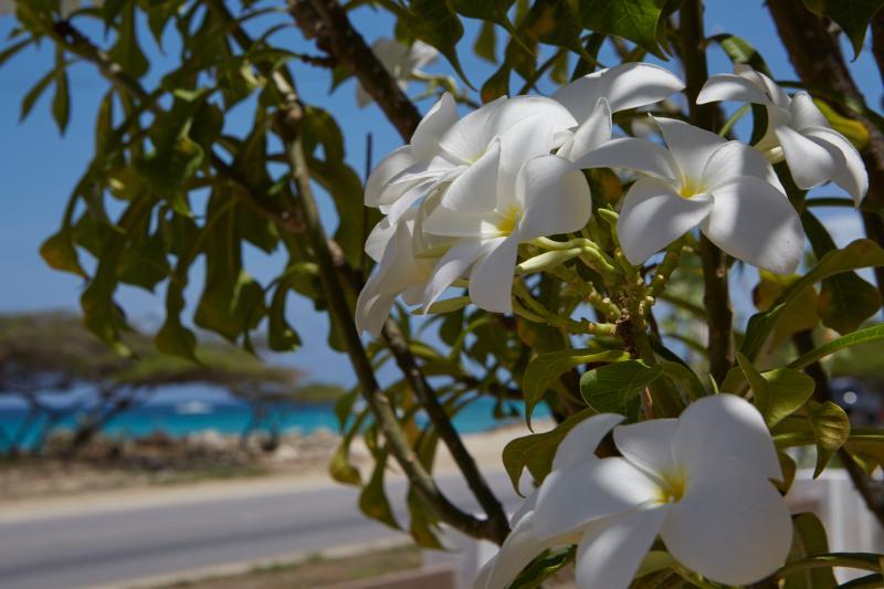 Comfortable oceanfront villa,2 min walk from beach - Image 1 - Malmok Beach - rentals
