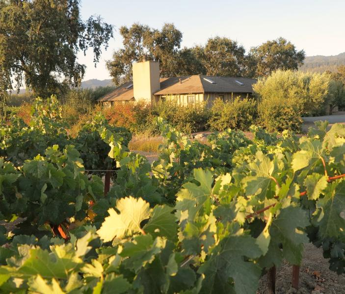 Casa Cabernet Amongst The Vines - Casa Cabernet - Saint Helena - rentals