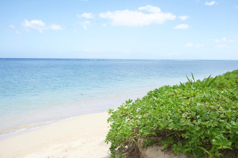 Beautiful calm, sandy beach just footsteps in front of our cottage! - Hawaii Beachfront Cottage - Hauula - rentals