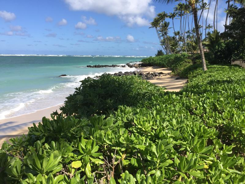 Kanaha Beach Cottage - Gorgeous - Image 1 - Paia - rentals