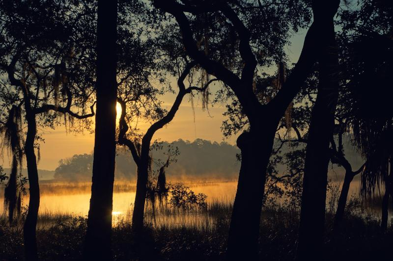 Sunrise through the Spanish Moss at the Retreat - Little Lucy Creek Retreat Pvt Dock - Beaufort - rentals