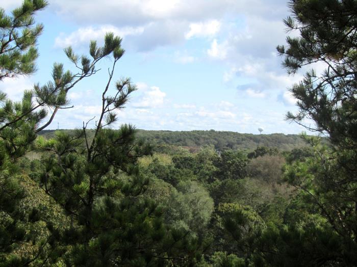 Enjoy views of the Beautiful Dry Meadow - Image 1 - Wellfleet - rentals