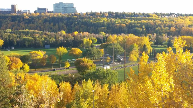 view from visitors parking - Chic And Spacious 1BD on Jasper Ave - Edmonton - rentals