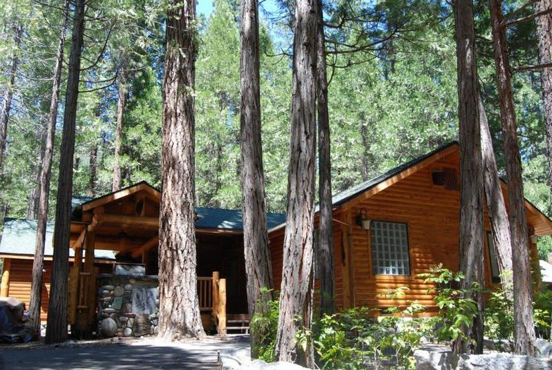 (66) Grizzly Giant - (66) Grizzly Giant - Yosemite National Park - rentals
