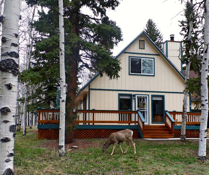 Welcome to our 'Cabin in the Woods!' - Cozy Mountain Cabin on 5 Beautiful, Wooded Acres - Divide - rentals