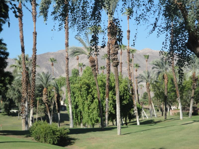 View from the patio - Palm Desert Vaction Home - Palm Desert - rentals