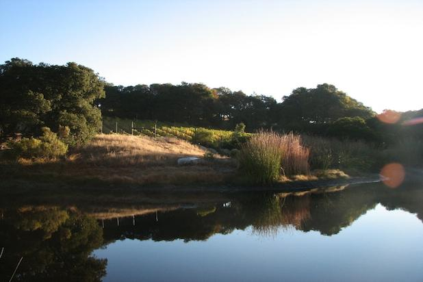 Lake Views of vineyards - Private Vineyard Property- 2 Lakes, Pool, Bocce - Napa - rentals