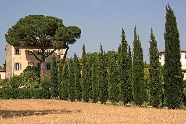 5 bedroom Villa in Arezzo, Tuscany, Italy : ref 2266028 - Image 1 - Ponte alla Chiassa - rentals