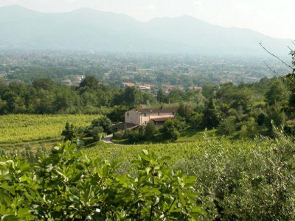 6 bedroom Villa in Capannori, Tuscany, Italy : ref 2268926 - Image 1 - Matraia - rentals
