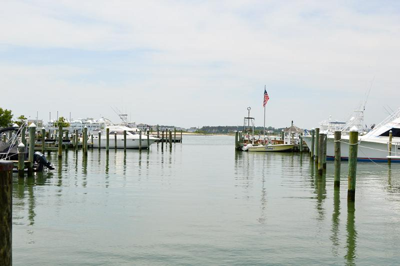 White Marlin 111B - Image 1 - Ocean City - rentals