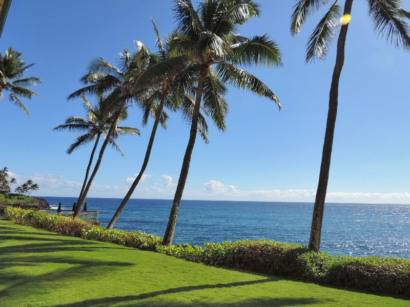 Is this for a front yard why you came to Poipu Shores? - Poipu Shores 104A, Deluxe Oceanfront, 2BR Condo - Poipu - rentals