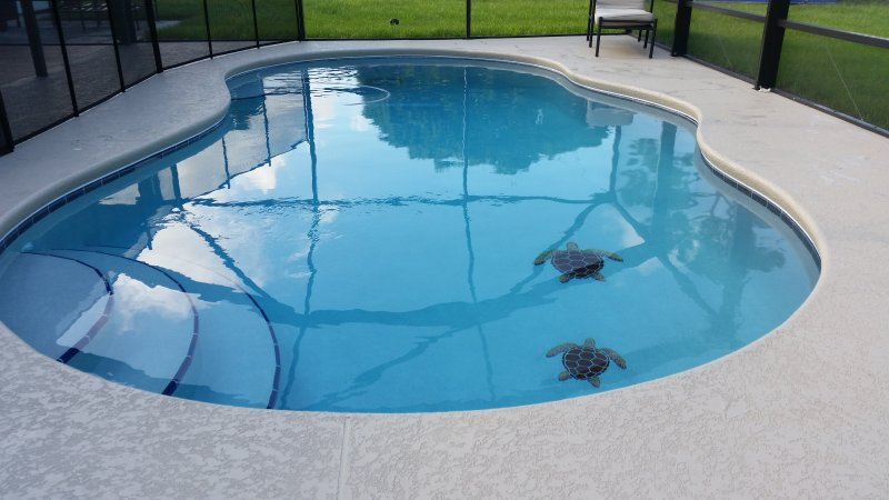 Relax by the fabulous pool, with the screened Lanai - Great family vacation pool home local golf & more - Port Saint Lucie - rentals