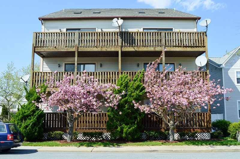 Exterior - Diamond Bay 5 - Ocean City - rentals