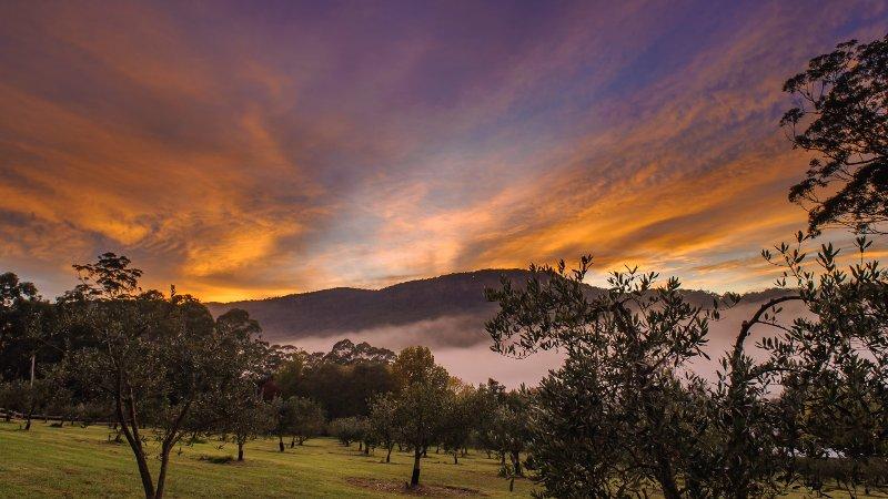 Rivendale Retreat - Image 1 - Kangaroo Valley - rentals