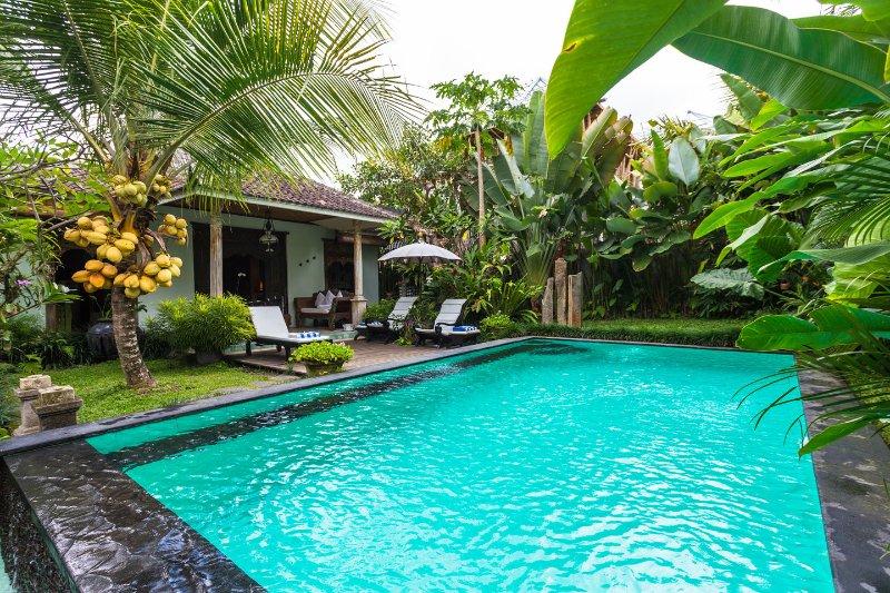 The Pool - Rumah Sawah Kita (Our Rice-field House) - Ubud - rentals