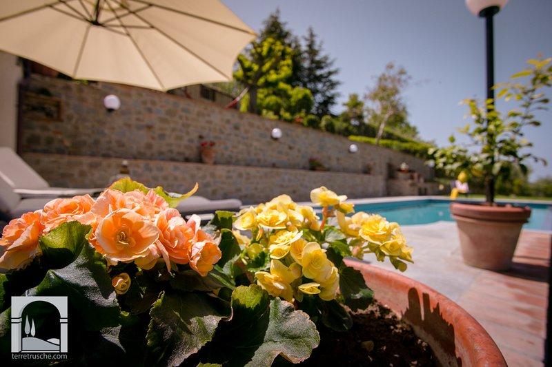 Silvana Garden traditional Villa walk to Cortona - Image 1 - Cortona - rentals