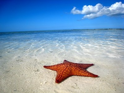 LUXURY RENTALS~ Starfish Beach House - Image 1 - Naples - rentals
