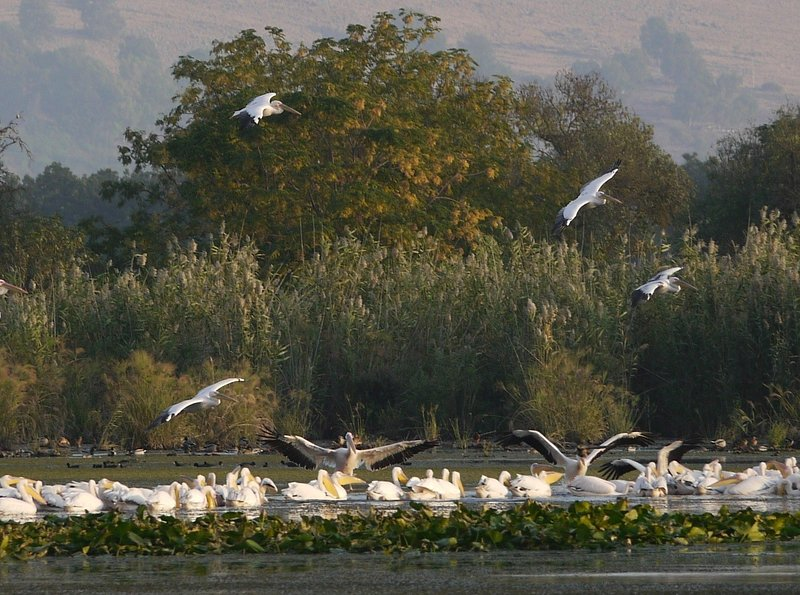 Agamon Hahula - birds watching site - 2 Bedroom Apartment in Hula Valley - Yesod Hamaala - rentals