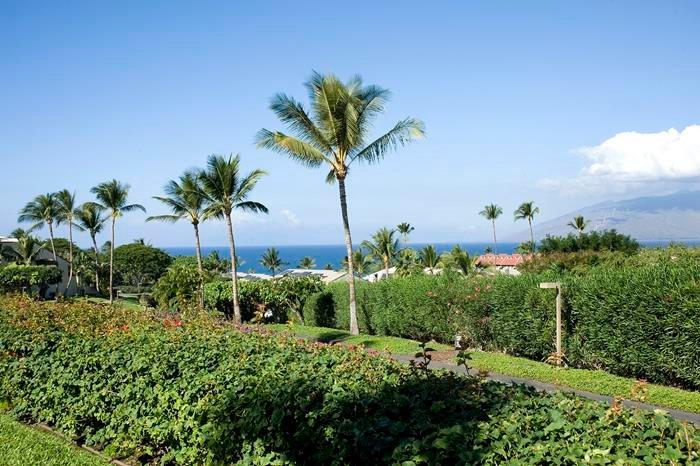 Maui Kamaole 1 Bedroom Ocean View J121 - Image 1 - Kihei - rentals