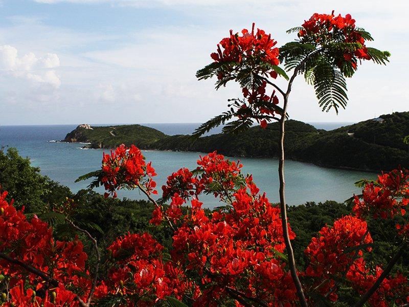 View of Flamboyant over Fish Bay - Cocoa Reef Villa - Cruz Bay - rentals